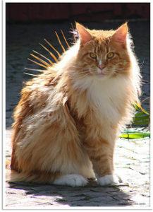 Foto 'prikkelende' kat